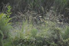 Belleza de la naturaleza Fotos de archivo