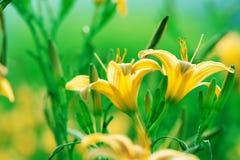 Belleza de la naturaleza imagen de archivo libre de regalías