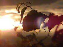 Belleza de la naturaleza fotografía de archivo libre de regalías