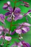 Belleza de la naturaleza de la flor Imágenes de archivo libres de regalías