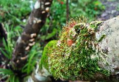 Belleza de la naturaleza en la corteza del árbol Imagen de archivo libre de regalías