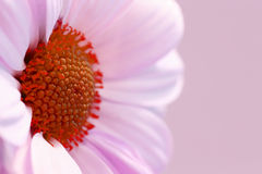 Belleza de la naturaleza - flor Fotos de archivo libres de regalías