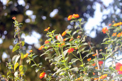 Belleza de la primavera Imagen de archivo libre de regalías