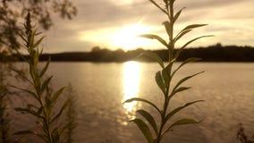 Belleza de la tarde Foto de archivo libre de regalías