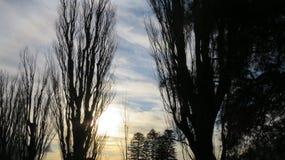 Belleza de la tarde Imagen de archivo