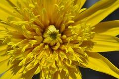 Belleza de las flores frescas del cierre del extremo de la hoja del verde de la naturaleza para arriba Fotografía de archivo