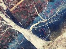 Belleza de los árboles Foto de archivo