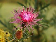 Belleza de los cactus Fotos de archivo