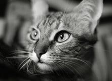 Belleza de los gatos Imagenes de archivo