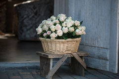 Belleza de rosas Foto de archivo