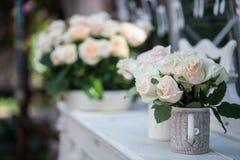 Belleza de rosas Fotos de archivo