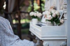 Belleza de rosas Fotos de archivo libres de regalías