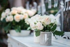 Belleza de rosas Foto de archivo libre de regalías