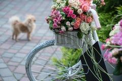 Belleza de rosas Fotografía de archivo libre de regalías