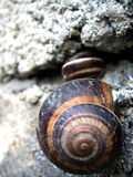 Belleza de Shell Fotos de archivo