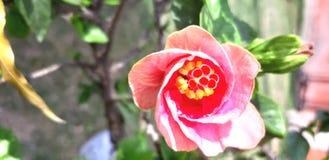 Belleza de una flor con los tarros del fullof de los colores fotos de archivo
