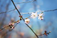 Belleza del alcohol de la primavera de la naturaleza Imagen de archivo