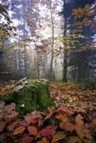 Belleza del bosque negro, Alemania Foto de archivo