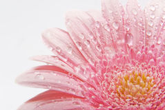 Belleza del fondo de la flor imagen de archivo libre de regalías