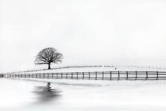 Belleza del invierno del árbol de roble Imagenes de archivo