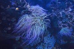 Belleza del mundo submarino imagen de archivo libre de regalías