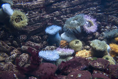 Belleza del mundo submarino imagenes de archivo