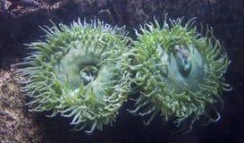 Belleza del mundo submarino foto de archivo libre de regalías