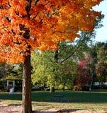 Belleza del otoño Foto de archivo