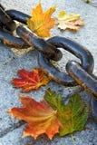 Belleza del otoño de descoloramiento Foto de archivo libre de regalías