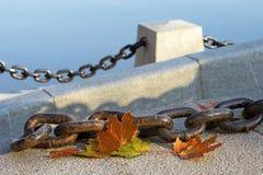 Belleza del otoño de descoloramiento Fotografía de archivo