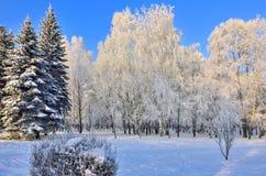 Belleza del paisaje del invierno en parque nevoso en el día soleado Fotografía de archivo libre de regalías