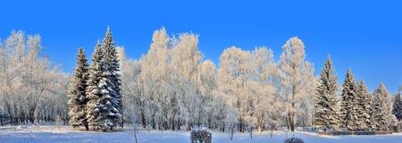 Belleza del paisaje del invierno en parque nevoso en el día soleado Fotos de archivo