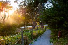 Belleza del parque de Presidio, San Francisco Imagen de archivo libre de regalías