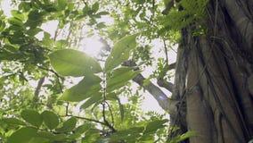 Belleza del sol que brilla a través de las hojas verdes del árbol grande almacen de video