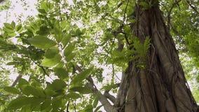 Belleza del sol que brilla a través de las hojas verdes del árbol grande almacen de metraje de vídeo