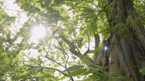 Belleza del sol que brilla a través de las hojas verdes del árbol grande metrajes