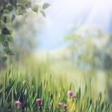 Belleza del verano imagenes de archivo