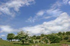 Belleza del verano imagen de archivo libre de regalías