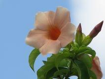 Belleza delicada en una flor simple Fotografía de archivo