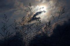 Belleza dramática Hierba del campo y cielo cubierto Imágenes de archivo libres de regalías