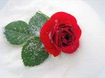 Belleza dulce Imagen de archivo