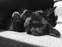 Belleza durmiente fotos de archivo