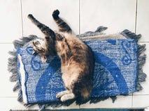 Belleza durmiente imagen de archivo libre de regalías