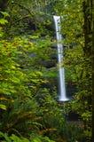 Belleza en el bosque Imagen de archivo libre de regalías