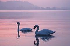Belleza en el lago Fotos de archivo libres de regalías