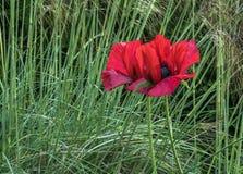 Belleza en la hierba larga foto de archivo