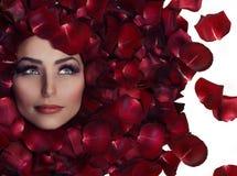 Belleza en los pétalos de Rose foto de archivo
