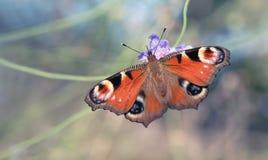 Belleza en mosca Imagen de archivo libre de regalías