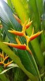 Belleza en naturaleza Fotografía de archivo