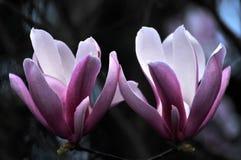 Belleza en naturaleza Foto de archivo libre de regalías